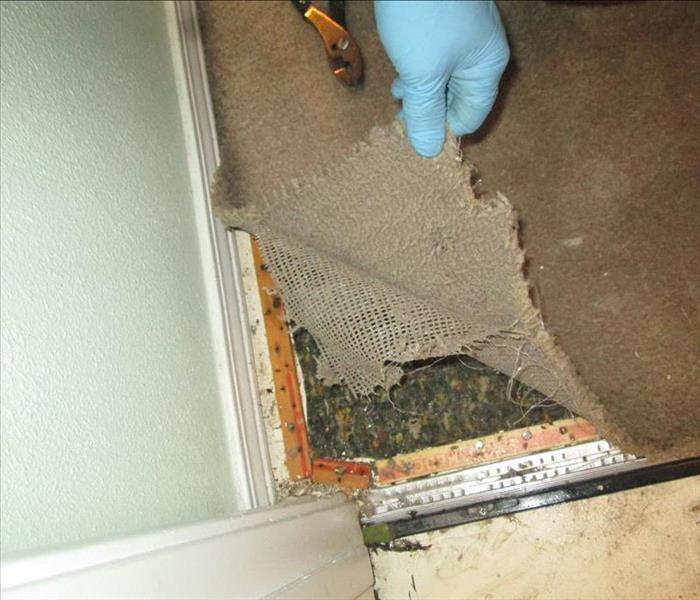 Water Damaged Carpet Rio Rancho