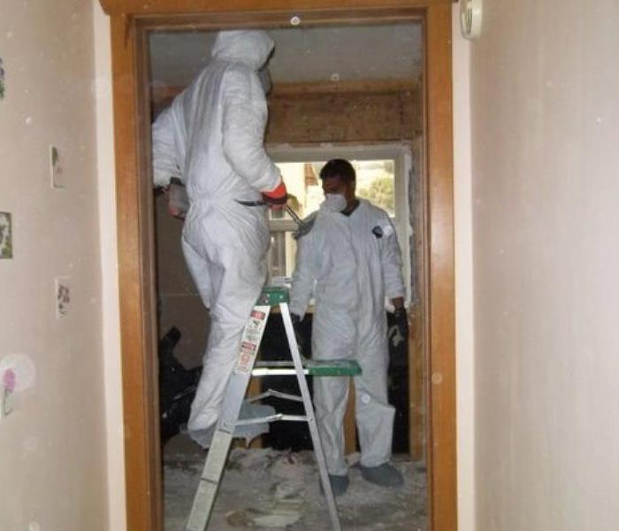Mold Remediation Mold Busters