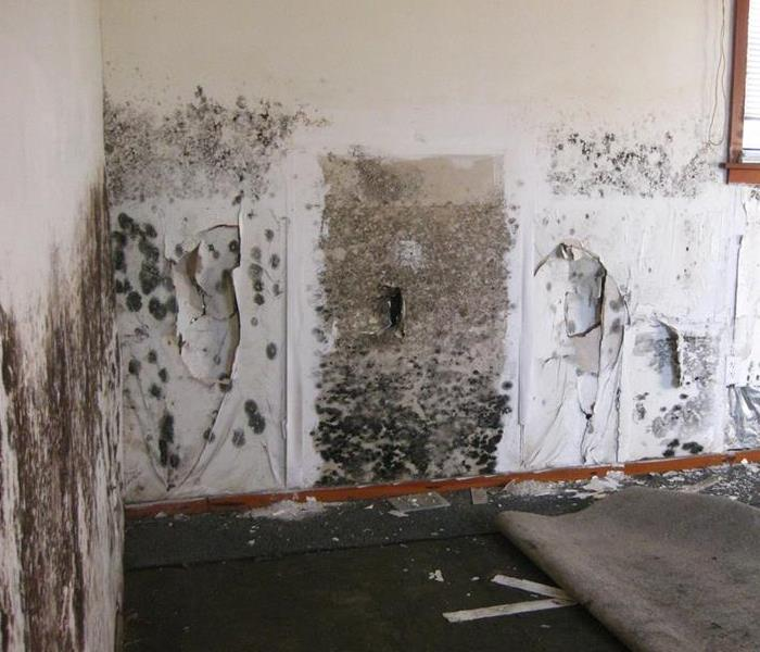 Mold Remediation What To Do If Your Home In Rio Rancho or Sandoval County Home Has Mold Damage