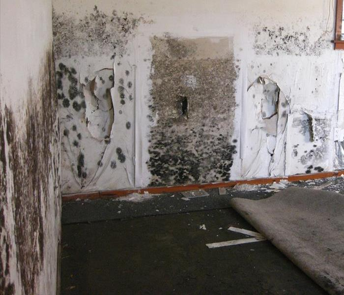 Mold Remediation Mold Remediation: A Brief Overview