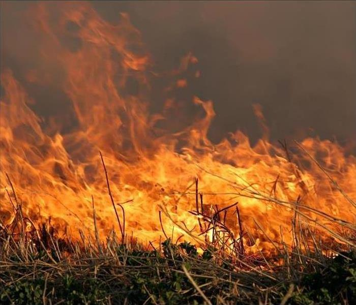 Fire Damage Significant Wildfires Can Result in Extreme Restoration Measures in New Mexico